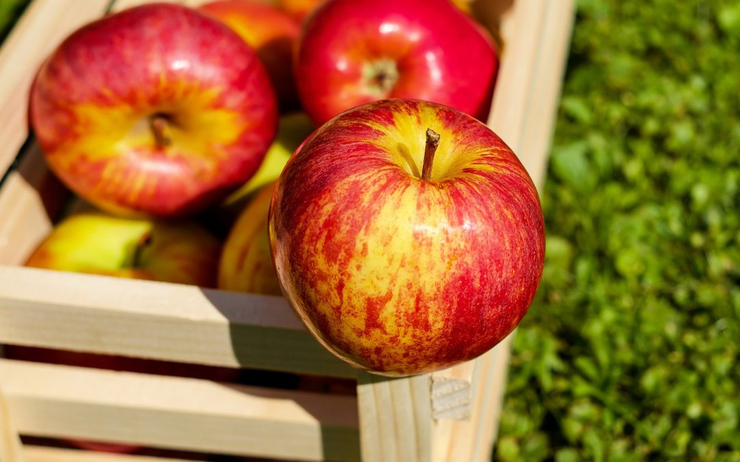 An Apple a Day; 6 Reasons They Are Good for You