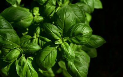 Fresh Herbs to Grow this Spring
